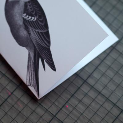 Bird knicken