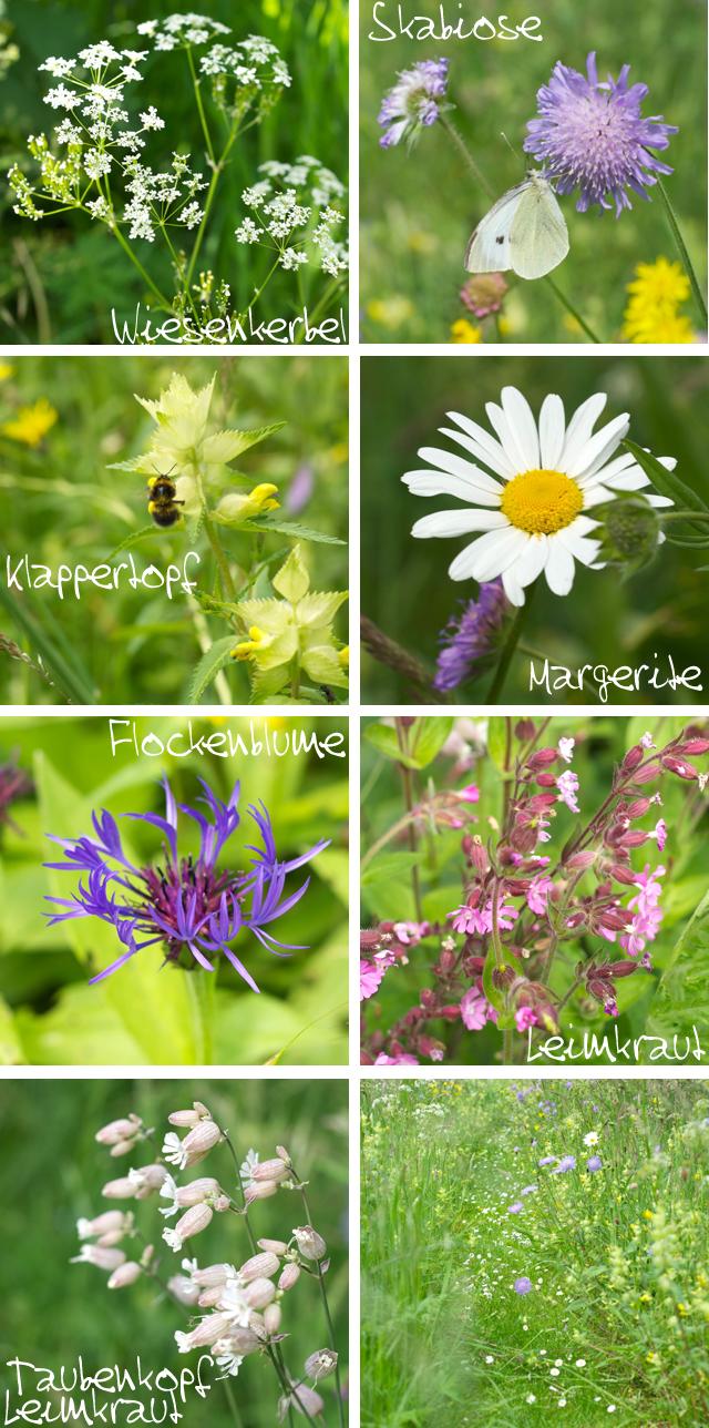Blumen_Namen