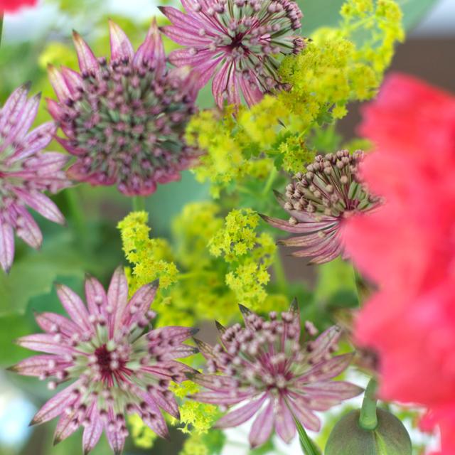 Blumenstrauss_cloese