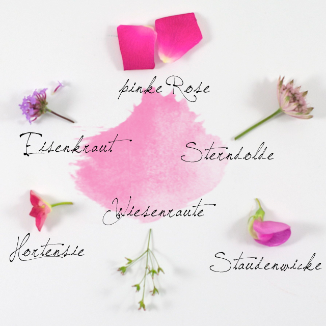 Erlaeuterung_einzelne_Blumen
