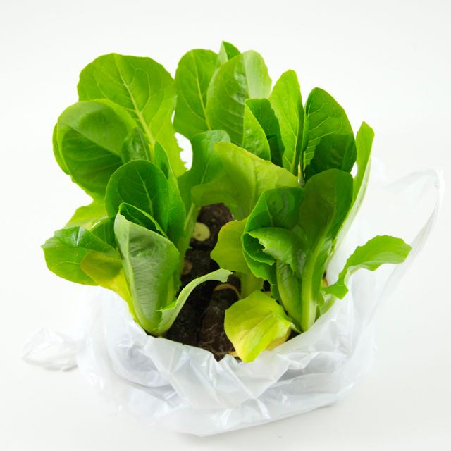 Romana-Salat