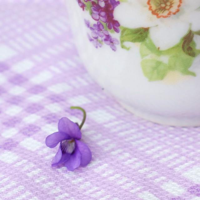 Veilchenblüte