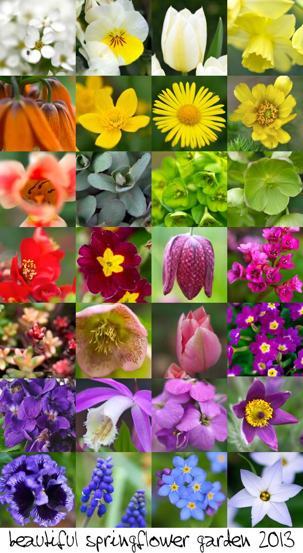 springflower garden