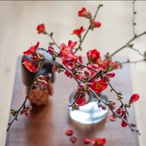 Rote Blüten der Zierquitte in der Vase mit japanischer Koskeshi Puppe