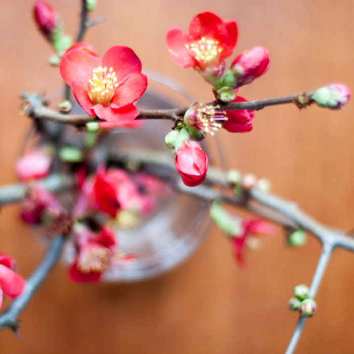 Friday Flowers – die rote Zierquitte und Frau Kokeshi