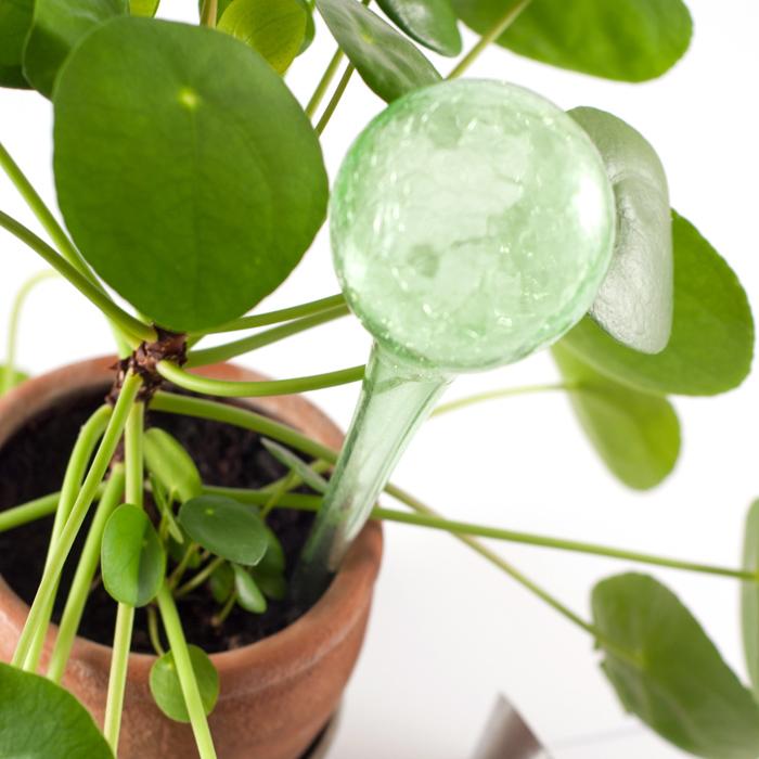 Bewaesserungsglas für Zimmerpflanzen