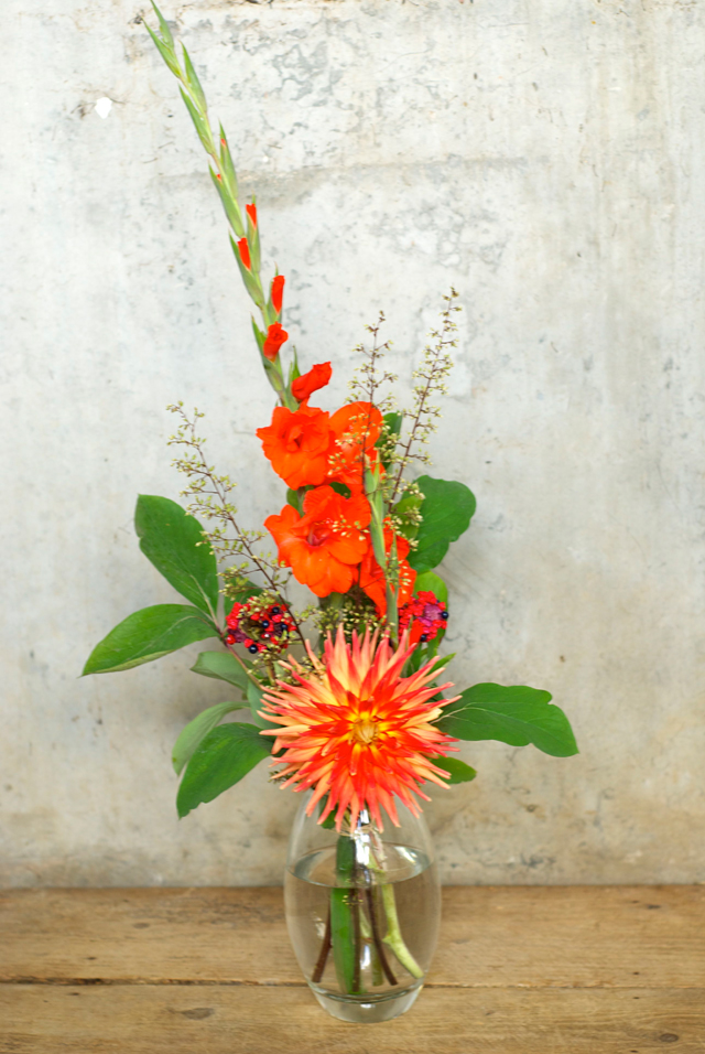 Friday Flowers | Knallpeng, ein Feuerwerk!