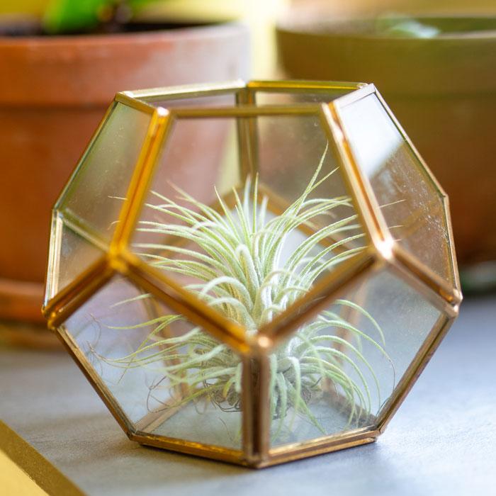 Flohmarktfund: Geometrisches Mini-Terrarium aus Glas