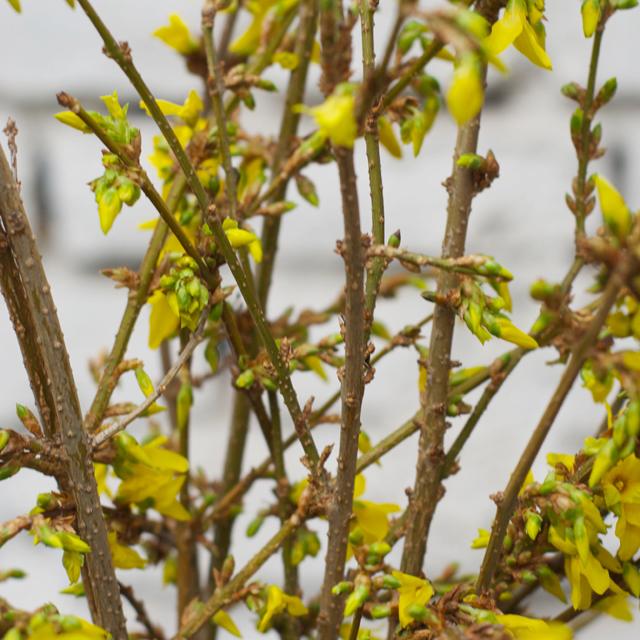 Friday Flowers – Mit Knallgelb gegen das Wintergrau