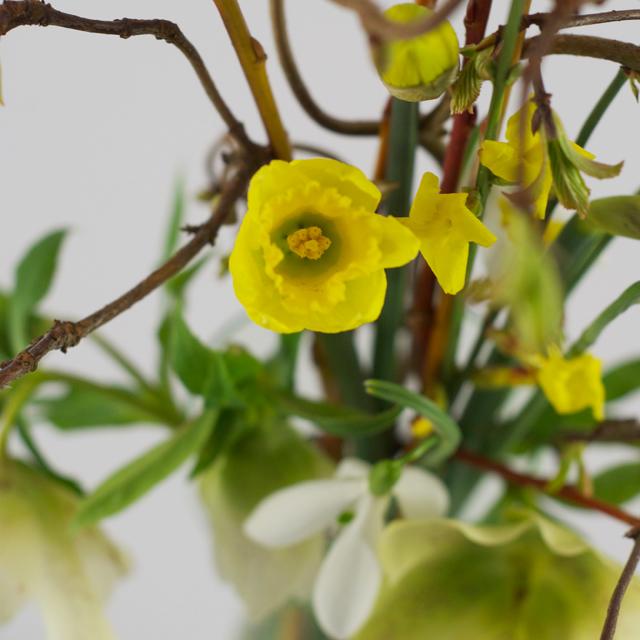 Friday Flowers – Der erste Gartenstrauss