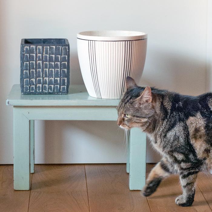 Uebertoepfe_und_Katze