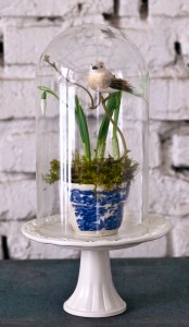 Vogelunterglas1